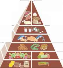 Food Pyramid Including Corn