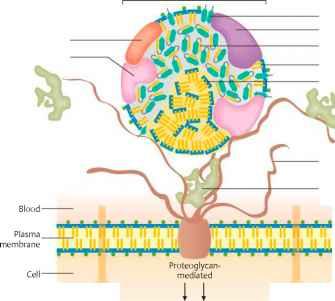 Lipoprotein Lipase - Nutrition Guide - Karel's Nutrition Blog