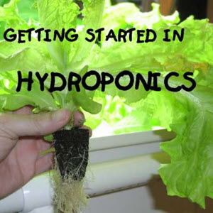 Simple Hydroponic Systems