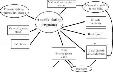 Maternal Consequences Anemia