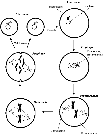 Interphase Gap