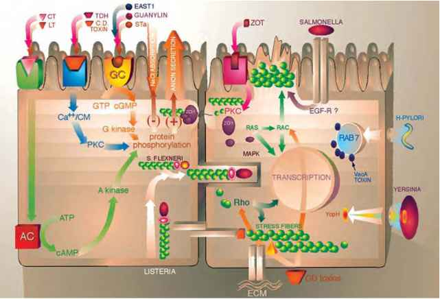 Viral Pathways Water