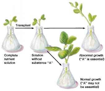 mineral requirements of plants Describes use of mitscherlich equation to  relative nutrient requirements of plants we shall first  mineral nutrient requirements of plants plant.